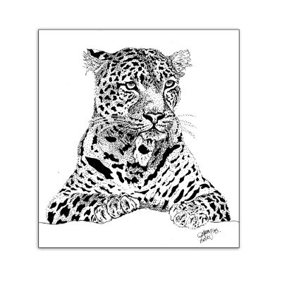 Leopard - pen & ink